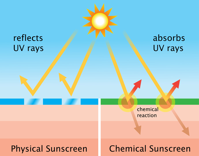 A diagram of the action of chemical sunscreen versus physical sunscreen.